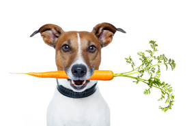 Four Paws Acupuncture offers telephone consultations for your dog!